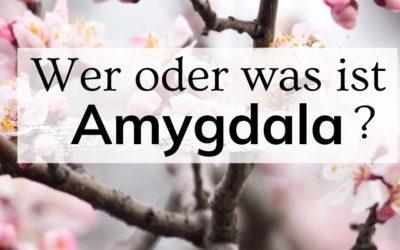 Wer oder was ist Amygdala?